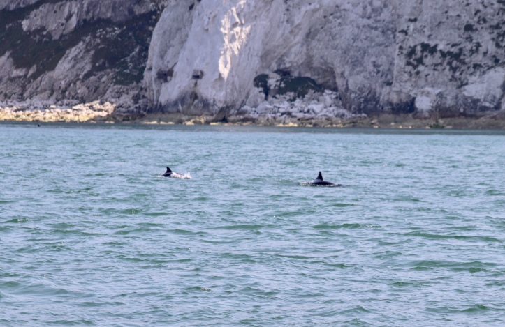 Dolphins, orange hat ladies, Isle of Wight, swimming, sea swimming, wild swimming
